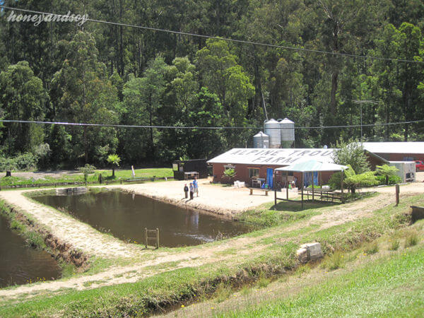 Alpine Trout Farm