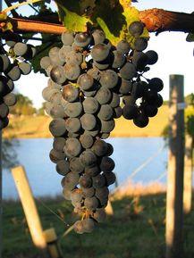 Kouark Vineyard & Winery