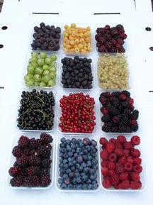 Sunny Creek Organic Berry Farm